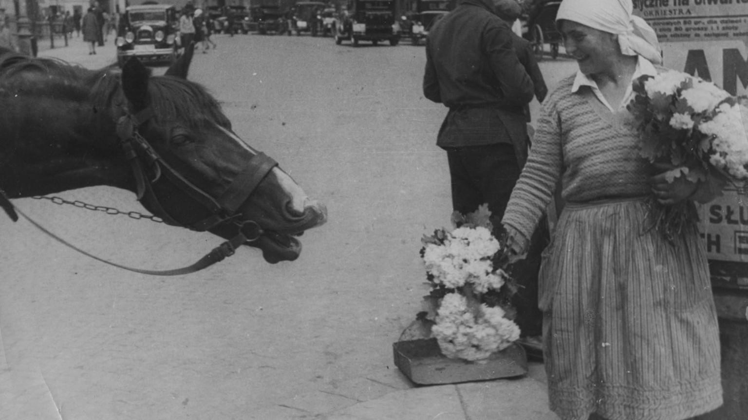 Zdjęcie dla kartki: Konie Warszawy