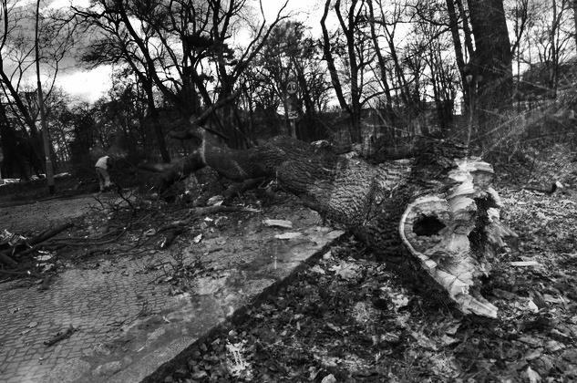 Zdjęcie dla kartki: Cyrk radziecki w opałach