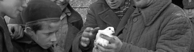 Zdjęcie do artykułu: Gołębie na Kercelaku